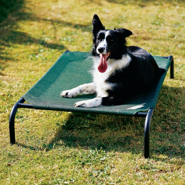 Elevated Indoor/Outdoor Pet Cot by Coolaroo