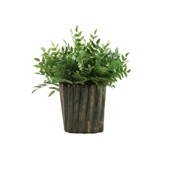 Green Locust Spray Desk Top Plant in Planter by D & W Silks