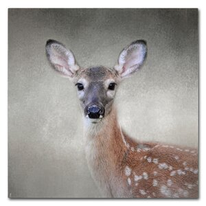 'Little Miss Lashes White Tailed Fawn' Graphic Art Print on Wrapped Canvas by Trademark Fine Art
