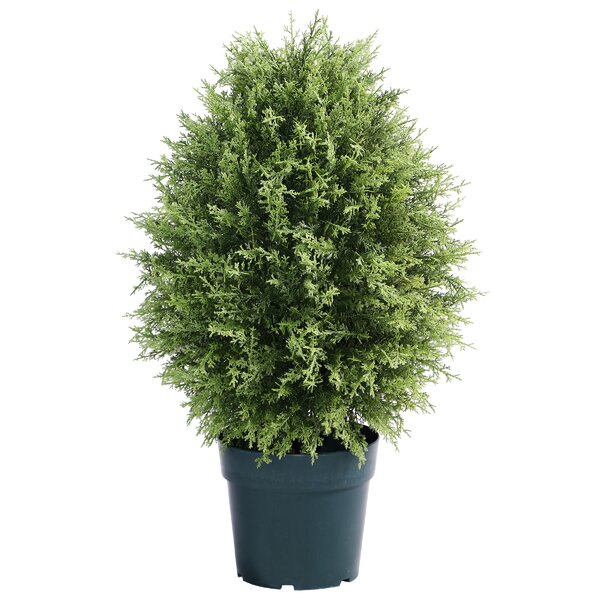 Cypress Floor Boxwood Topiary in Planter by National Tree Co.