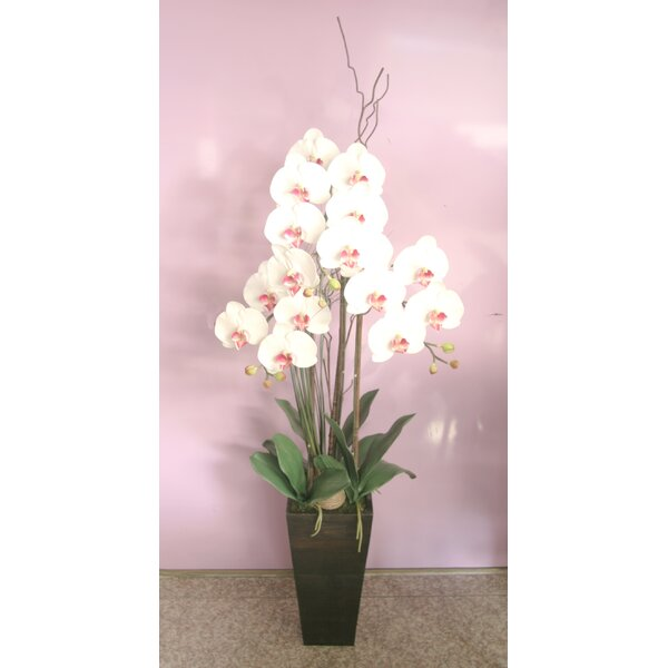 Phalaenopsis Orchids Floral Arrangement in V-Shaped Base by Red Vanilla