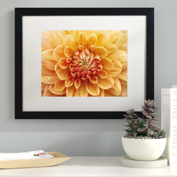 Remarkable Orange Dahlia Framed Photographic Print On Canvas Theyellowbook Wood Chair Design Ideas Theyellowbookinfo