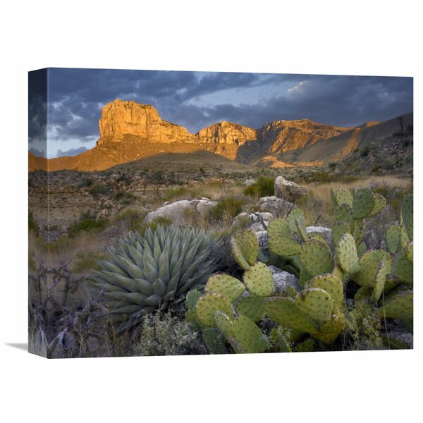 Nature Photographs Opuntia Cactus and Agave, Guadalupe Mountains National Park, Chihuahuan Desert, Texas by Tim Fitzharris Photographic Print on Wrapped Canvas by Global Gallery