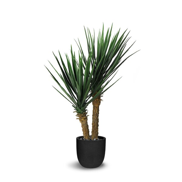 Yucca Rostrata Floor Succulent Tree in Pot by Bayou Breeze