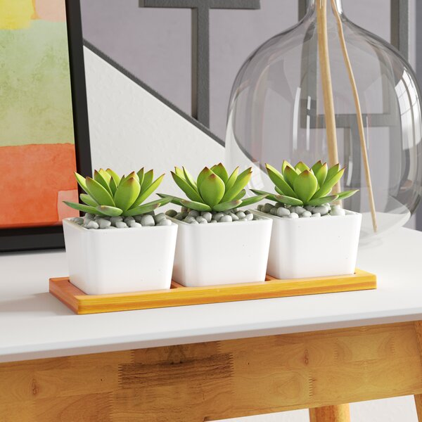 Desktop Succulent Plant in Pots (Set of 2) by George Oliver