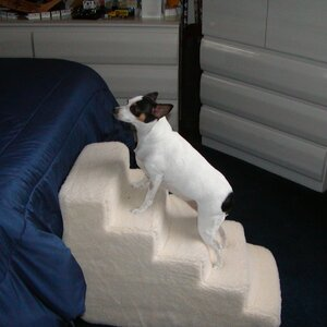Foam 5 Step Pet Stair