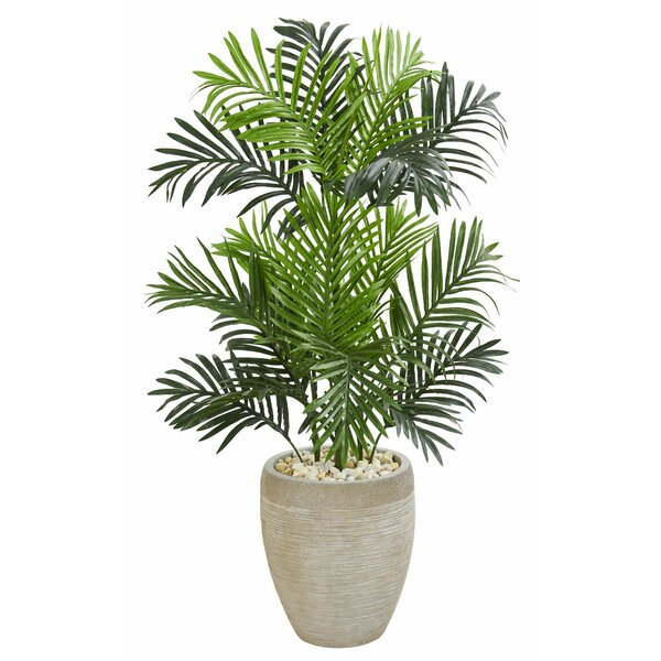 Paradise Floor Palm Tree in Planter by Highland Dunes
