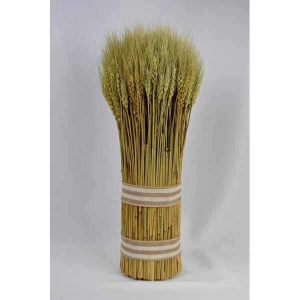 Natural Bundle Wheat Grass by August Grove
