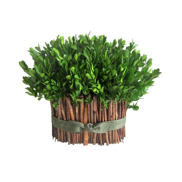 Preserved Boxwood Bundle Topiary by Jeco Inc.