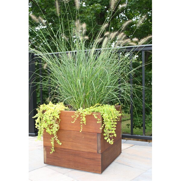 Pedroy Wood Planter Box by Bayou Breeze