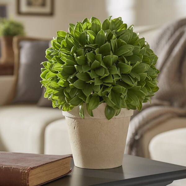 Kinsley Topiary Plant In Pot by Three Posts