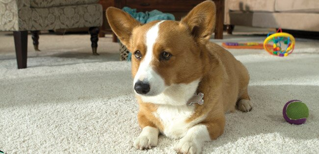 Best Pet Friendly Flooring Guide Wayfair