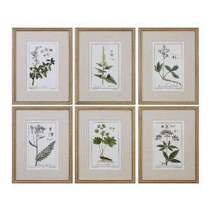 Floral Botanical Study 6 Piece Framed Graphic Art Set by Darby Home Co