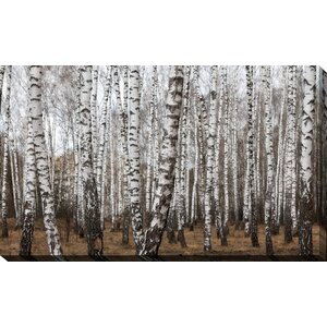 'Birching Around 7' Photographic Print on Wrapped Canvas by Picture Perfect International