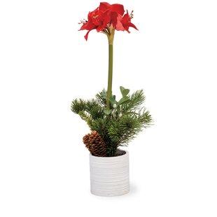 Boston international silk flower depot artificial flowers youll amaryllis topiary pot by boston international mightylinksfo