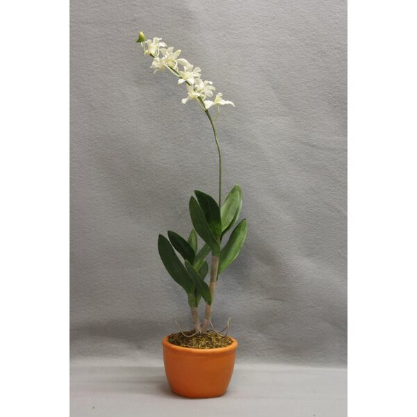 Orchid Floral Arrangement in Pot by House of Hampton