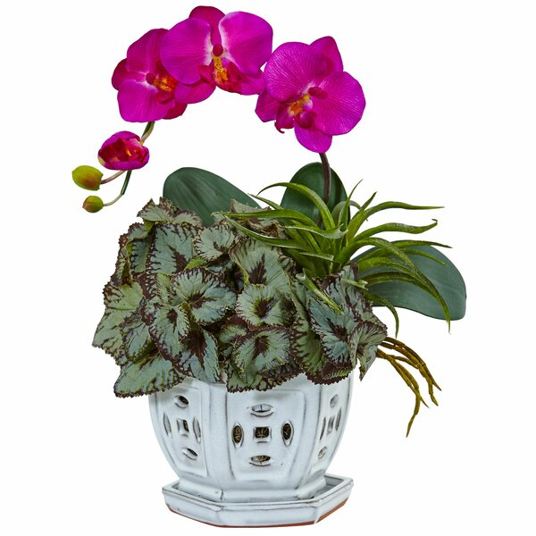 Silk Mini Phalaenopsis Orchid and Succulent Floral Arrangement in Decorative Planter by Bloomsbury Market