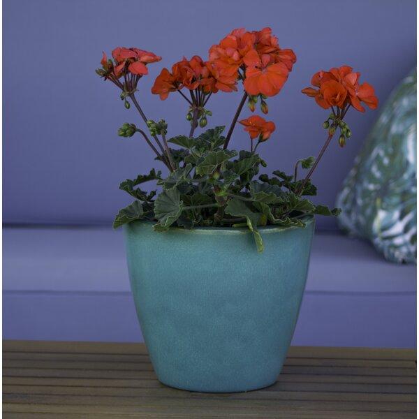 Rosen Plastic Pot Planter by Bay Isle Home