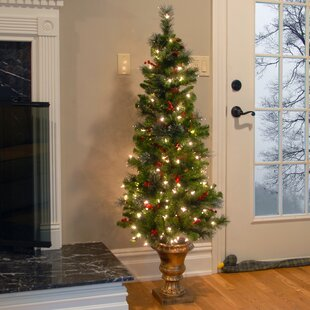Entrance Green Spruce Artificial Christmas Tree With 150 Clear White Lights Stand