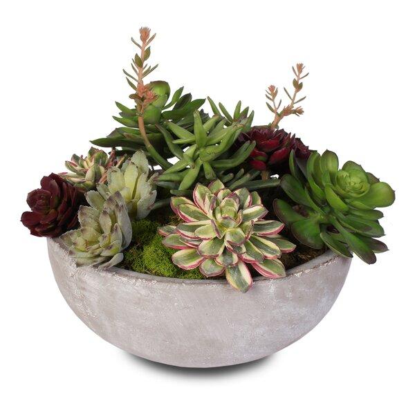 Artificial Desktop Succulent Plant in Pot by Foundry Select