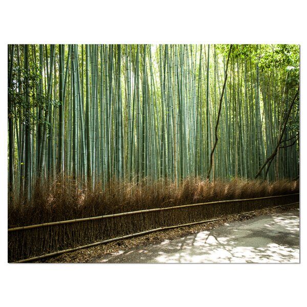 Beautiful View of Bamboo Forest Photographic Print on Wrapped Canvas by Design Art