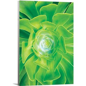 'Modern Bright Green Flower' Graphic Art on Wrapped Canvas by Artzee Designs