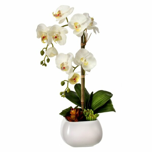 Potted Phalaenopsis and Succulents in Bowl by Regency International