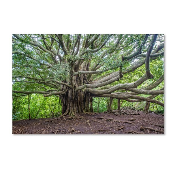 Banyan by Pierre Leclerc Photographic Print on Wrapped Canvas by Trademark Fine Art
