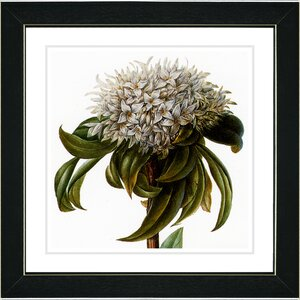 Vintage Botanical No. 37W by Zhee Singer Framed Painting Print by Studio Works Modern