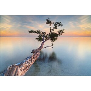 'Water Tree XIV' Photographic Print by East Urban Home