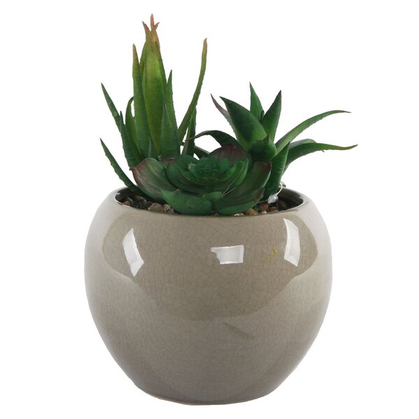 Desktop Faux Succulent Plant in Pot by George Oliv