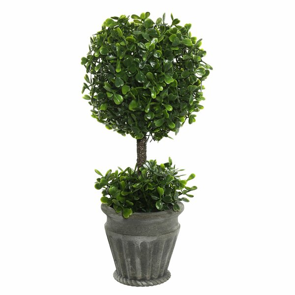 Artificial Boxwood Topiary in Urn by Ophelia & Co.