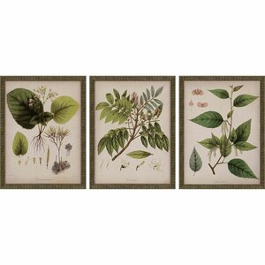 'Plants I' by Mendez 3 Piece Wall Art Set by Paragon