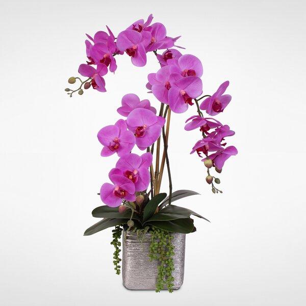 Succulent Beauty Orchid and Succulent Floral Arrangement in Pot by Orren Ellis