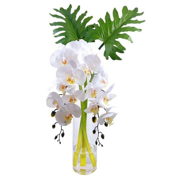 Phalaenopsis Orchid Xanadu Leaves in Floral Arrangement in Vase by Bloomsbury Market