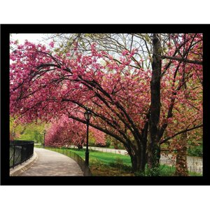 'Cherry Blossom in Central Park' Framed Photographic Print by Buy Art For Less