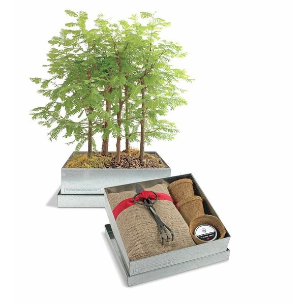 Bonsai Redwood Forest Growing Kit by Wind & Weather