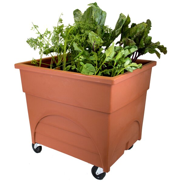 City Picker Plastic Planter Box by EMSCO Group