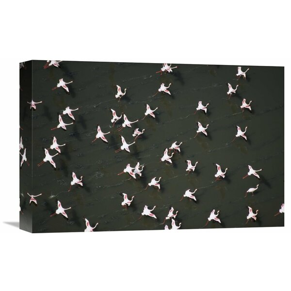 Nature Photographs Lesser Flamingo Flock Taking Flight from the Surface of a Lake Kenya by Tim Fitzharris Photographic Print on Wrapped Canvas by Global Gallery