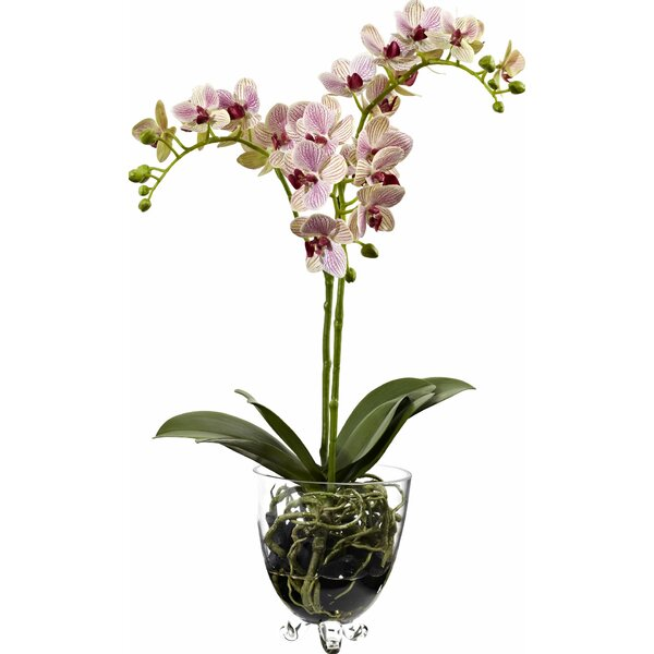 Raspberry Orchid Elegance Arrangement by Nearly Natural