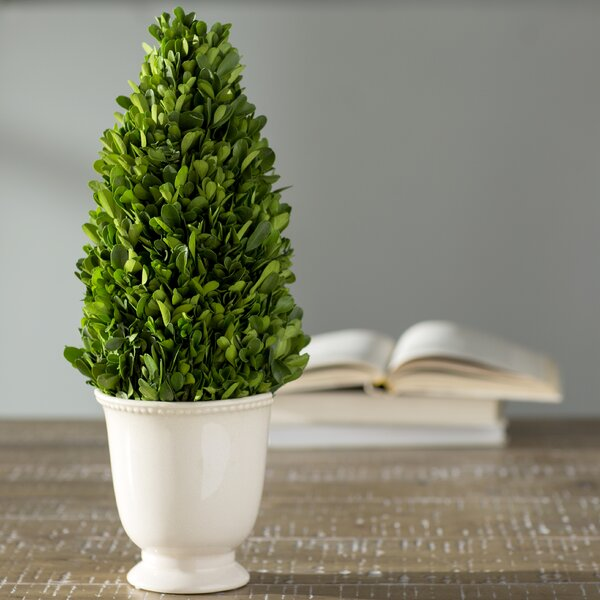Ceramic Boxwood Topiary in Pot by Lark Manor