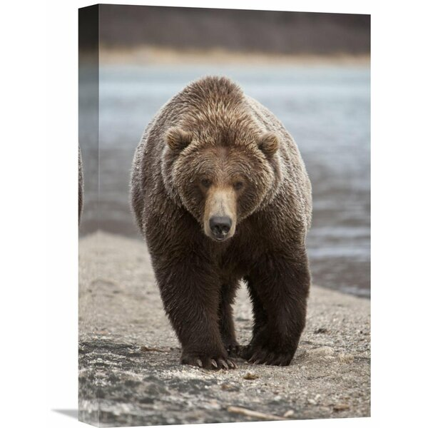 Nature Photographs Grizzly Bear, Katmai National Park, Alaska by Matthias Breiter Photographic Print on Wrapped Canvas by Global Gallery