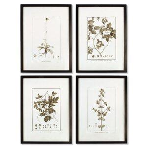 'Sepia Tone Botanical' 4 Piece Framed Graphic Art Set by Gracie Oaks