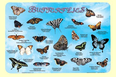 Butterflies Placemat (Set of 4) by Painless Learning Placemats