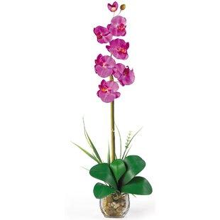Single silk flowers wayfair liquid illusion single phalaenopsis silk orchid flowers mightylinksfo