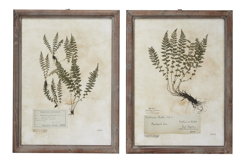Bay Isle Home Large Rectangular French Vintage Botanical 2 Piece Picture Frame Painting Print Set On Wood Wayfair