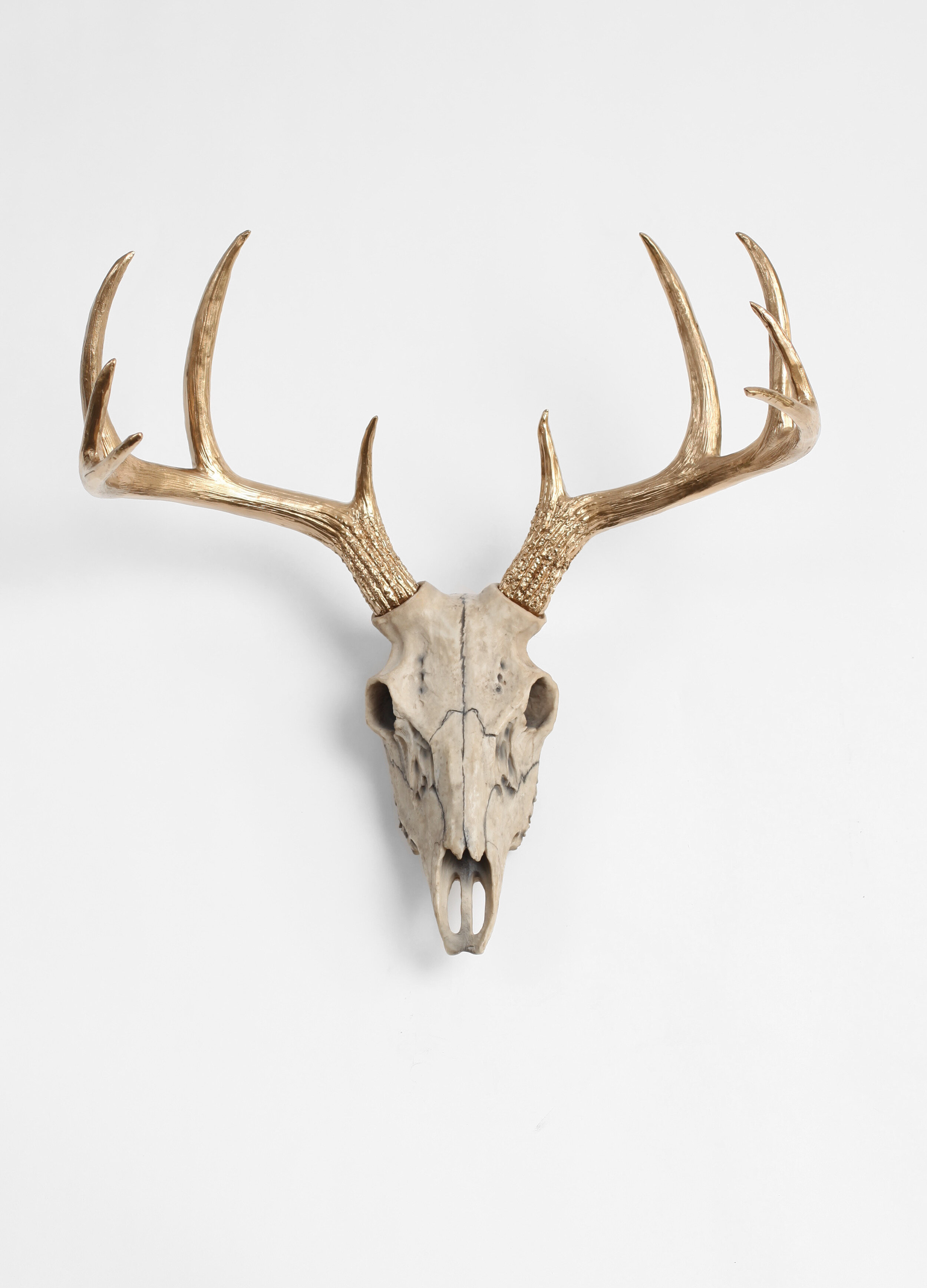 Natural Deer Skull With Antlers Wall Decor
