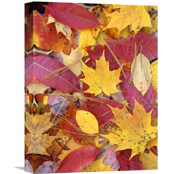 Nature Photographs Sourwood and Cherry Leaves, North America by Tim Fitzharris Photographic Print on Wrapped Canvas by Global Gallery
