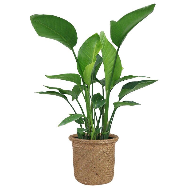 live plant in basket