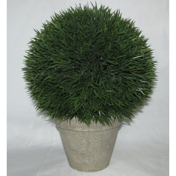 Cedar Topiary in Pot by Jeco Inc.